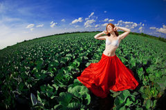 haired röd solroskvinna Royaltyfri Bild