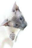 Hairless Cat Stock Photo