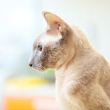 Hairless Cat Stock Images