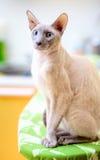 Hairless Cat Royalty Free Stock Photos
