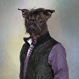 Hairless dog wearing a shirt and a jacket Stock Photo