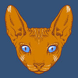 Hairless sphinx cat face graphics, outline Royalty Free Stock Photography