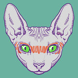 Hairless sphinx cat face graphics, outline Stock Images