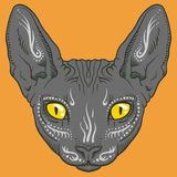 Hairless sphinx cat face graphics, outline Stock Photography