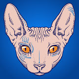 Hairless sphinx cat face graphics, outline Royalty Free Stock Image