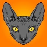 Hairless sphinx cat face graphics, outline Royalty Free Stock Photos