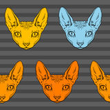 Hairless sphinx cat face graphics, pattern Stock Photos
