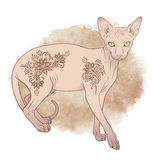 Hairless sphynx cat with mehndi ornaments Vector illustration Royalty Free Stock Images