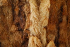 Hairly animal fur Royalty Free Stock Image