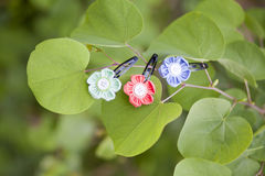 Hairpins on the tree. (flowers Royalty Free Stock Photo