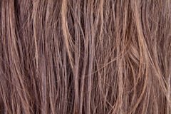 Hairs Royalty Free Stock Photo