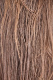 Hairs Royalty Free Stock Photos
