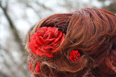 Hairstyle red roses. Hairstyle with some red roses royalty free stock photo