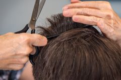 Comb before the Cut Stock Image