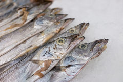 Hairtail fish. In the seafood market sale Stock Photos