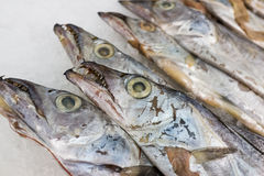 Hairtail fish. In the seafood market sale,closeup Stock Photography