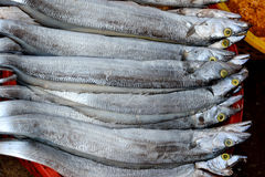 Hairtail fish. Raw hairtail fish selling in market, shown as fishing and agriculture concept Stock Image