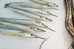 Hairtail fish. In the seafood market sale Royalty Free Stock Photos