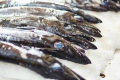Hairtails atlantiques de largehead sur la poissonnerie traditionnelle à Funchal Photographie stock
