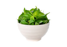 Hairy Basil, Ocimum basilicum in bowl on white Stock Photography