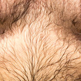 Hairy belly in a man as a background Stock Image