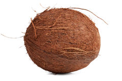 The hairy brown ripe coconut Stock Photography