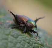 Hairy bug Stock Images