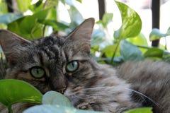 Hairy cat in garden Stock Photo