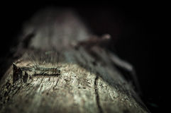 Hairy caterpillar. Camouflaged on a tree Stock Images