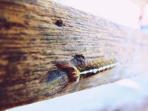 A hairy caterpillar on a Timber royalty free stock photo