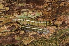 Hairy caterpillar on tree Stock Photo