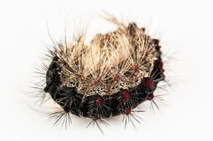 Hairy caterpillar on white Stock Photos