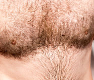 Hairy chest of a man in the open air Stock Photography