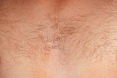 Hairy chest men Stock Images