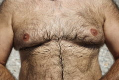 Hairy chest of overweight man. Joke on the beach and picture of a friend's hairy chest Royalty Free Stock Image