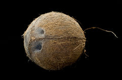Hairy coconut with black isolated background Royalty Free Stock Photo