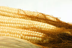 Hairy corn Royalty Free Stock Image
