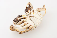Hairy crab Royalty Free Stock Images