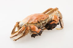 Hairy crab. Isolated on white Stock Photo