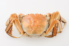 Hairy crab. Isolated on white Stock Images