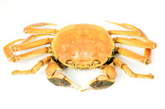 Hairy crab Stock Photo