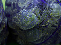 Hairy crabs. For sale in market Royalty Free Stock Image