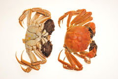 Hairy Crabs Stock Photos
