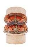 Hairy crabs on the Bamboo steamer Isolated in Stock Photography