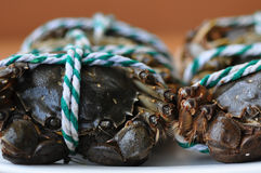 Hairy crabs Stock Images
