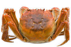 Hairy crabs Isolated on white Royalty Free Stock Photography