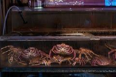 Hairy crabs in market, Hokadate. Japanese hairy crabs for sale & x28;Taraba& x29;, Hakodate, Hokkaido, Japan Stock Images