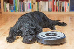 Hairy dog and the robotic vacuum cleaner Stock Images