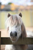 Hairy donkey. A long hair donkey looking at camera Stock Photos