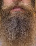 Hairy Face of a Man royalty free stock images